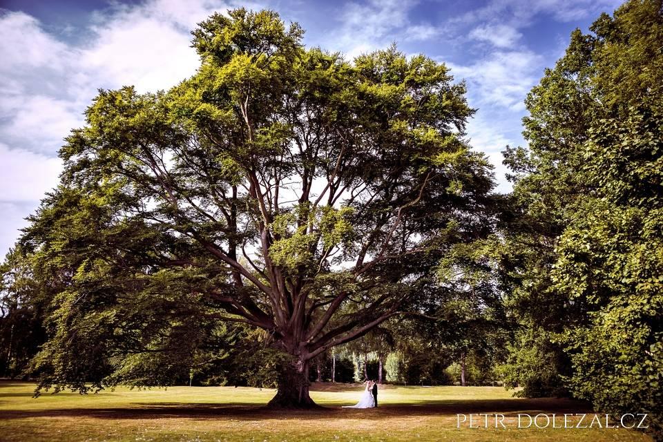 Svatební fotografie s mohutným stromem