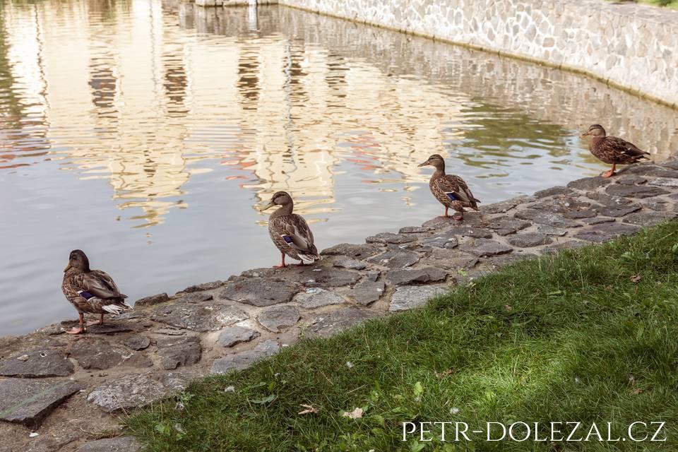 Na břehu rybníka Vily Kajetánka... taky čekají na svatební hostinu?